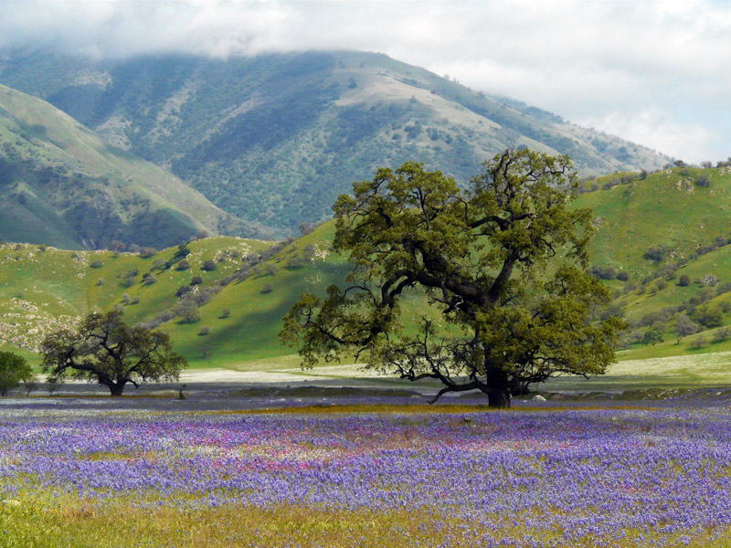 Tejon Ranch